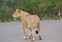Kruger 2015 / Photos of our 2015 trip to Kruger National Park