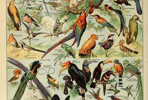 Bird print tables