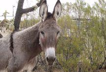 Donkey News / 'Disheveled' Donkeys rescued from Louth's Cooley Mountains David Lynch, Dundalk Democrat, 7 November 2016