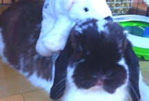 My rabbits and homemade cages / I made the nic cube cage in the pictures below