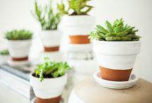 Succulentes / Cactus ✿