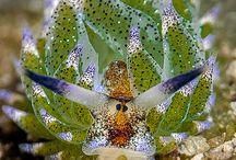 wonderful sea creatures
