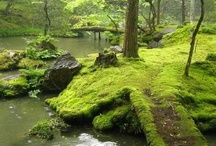 mossy places / by Beckey Douglas