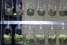 Pflanzenanbau