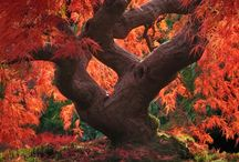 bonsai inspirations