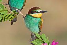 Hübsche vögel