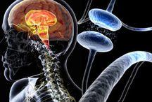 Cure For Parkinson's Disease - Natural Remedies