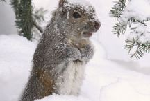Squirrell! / by Anita Neubert Young