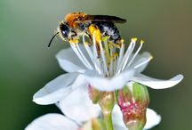 Insects / Macro photography of insects