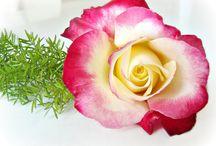 Krásné květy moje i cizí / Je to radost, mít tu boží nádheru doma
