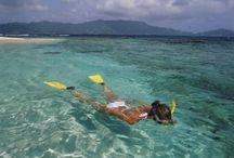 Grenada Snorkel / #Grenada #GND #PureGrenada #PureParadise #SpiceIsland @GrenadaBnB #GrenadaBnBLife #Paradise #TikiTime #SeaTurtles #Surf #Scuba #Snorkel #Sail #WaterFalls #Hike #Bike #Rainforest #Beaches #Mango #Coconut #Rum #RumPunch #Caribbean #Travel #Beaches #Dining #Liming