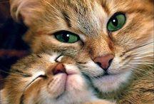 Sevimli Hayvanlar