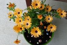 Weekend Garden projects / by Michelle Gourd