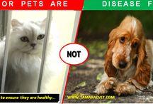 Pet Care - Tips and Tricks / Pet Care - Tips and Tricks