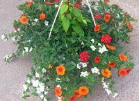 Suspensions de fleurs / Elles sont idéales pour décorer et égayer un jardin, une terrasse, une entrée, une cabane... !  Inspiration pour des associations de fleurs et de couleurs