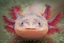Aquatic Creatures / by Valerie Pettit