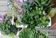 Plants, Trees etc.
