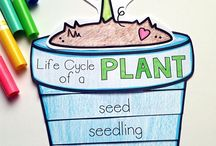 Plants in the classroom