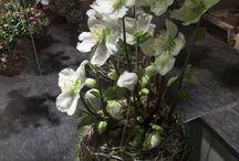 Green thumber / Landscape, Garden, Planting, Floral ideas
