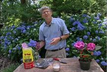 Change color for hydrangea
