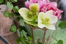 Plantering och blommor