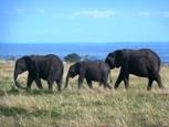 African Safaris / http://africapackages.com - Book an African Safari Today! / by koisan Safaris