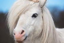 horses / oké ik zou zelf geen paard willen maar deze plaatjes zijn echt mooi