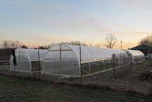 greenhouse 46