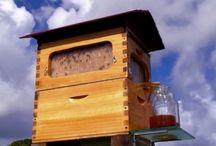 les ruches, le miel .