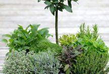 Trädgårdsodling i kruka