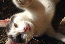 """il mio gatto """"menelao"""" & co..."""
