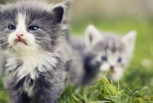 funny and cute animals / by Tabor Kluza