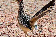 BIRDS! I LOVE Birds!!
