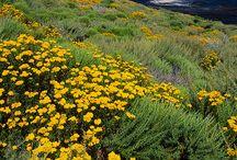 California / by Geri Lynn