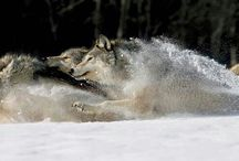 We Were Wolves / something wild
