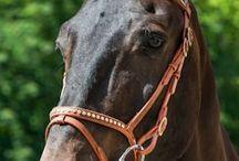 Lifestyle voor paarden / Paarden en hun schitterende hoofdstellen en/of frontriemen!