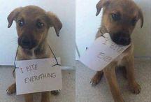 funny dogie