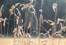 Pajęczyny / zdjęcia,przyroda,pajęczyny,pająki,natura...