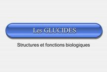 biologie cours
