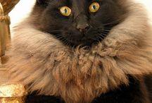 Grosses crinières / Le chat, nouveau roi de la jungle !