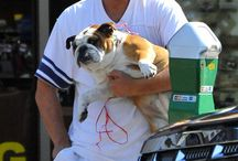 Dogs and Celebrities / Famous moms and dads with their furry friends...