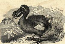 Dedicated to the Dodo