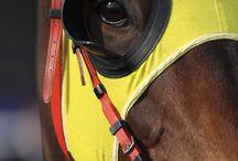 horse racing / Jockey