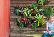 wall garden/ container garden