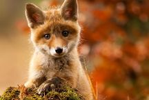 Animals / by Alex Wiles
