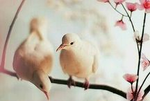 Beautiful birds and flowers.