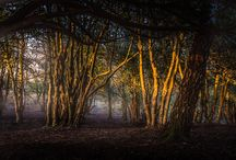 Hampshire Photography