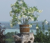 Outdoor & Garden inspiration / The garden of your dreams should express your special relationship with nature.