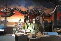 UTAH Dinosaur Discovery Trip!