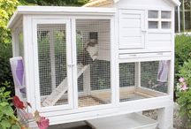 Bunny cages